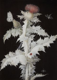 Barbara Regina Diezsch, A Thistle Branch with a Butterfly, Dragonfly, Ladybird and Spider 1777