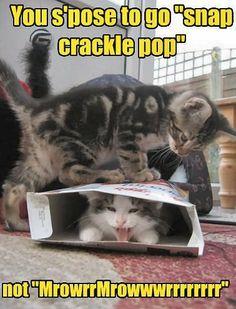Rice Krispies: Cat Edition