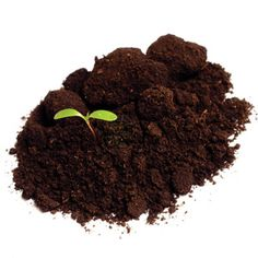 Small Bites - Organic growers test the soil every few years, to ensure the micronutrients plants need are available.