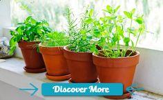8 Herbs That Can Help Control Diabetes