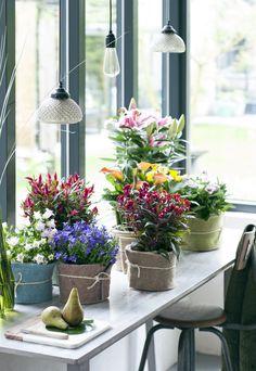 Grüne Nomaden Zimmerpflanzen des Monats Mai