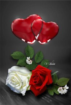 ❥●❥ ♥ ♥ ❥●❥ Beautiful Flowers Wallpapers, Beautiful Rose Flowers, Wonderful Flowers, Love Flowers, Hearts And Roses, Blue Roses, White Roses, Coeur Gif, Flower Boquet