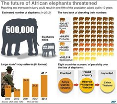 Animal protection groups have warned that as many as 20 percent of Africa's elephants could disappear within a decade if current poaching rates are not tackled Wildlife Protection, Animal Protection, Ivory Trade, Animals Information, United Nations Security Council, Un Security, School Daze, Wildlife Conservation, African Elephant