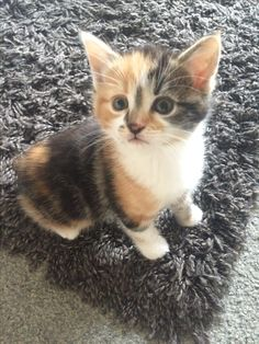 One of the kittens