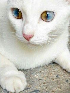 JUST A BEAUTIFUL CAT TO LOOK AT