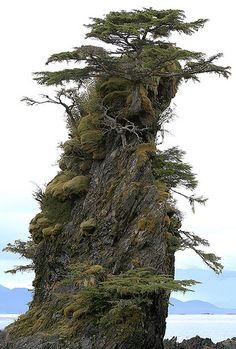 Natural Bonsai, Landscape, Sitka, Alaska by dailyartmasomenos, via Flickr