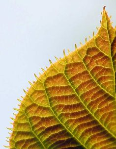 Fractals in Nature | High Intelligence Office