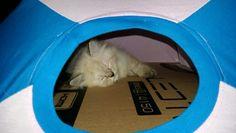 New tent,hopefully  he likes  it