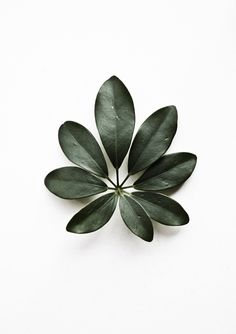 leaves, floral shape