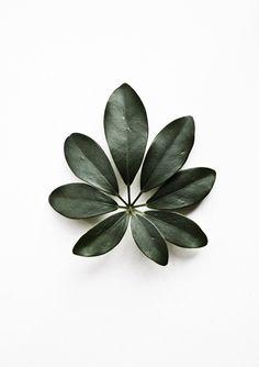 leaves, floral shape
