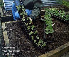 Pas bête ! semis à l'abri de salades et ou de pois dans une gouttière.