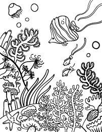 2497 best coral reef images in 2019 marine life ocean creatures Chevron Tahiti coral reef coloring page coral reef craft coral reef color coral reef pictures