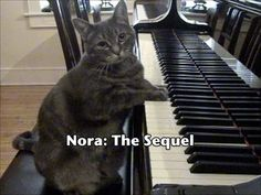 """Nora """"The Piano Cat: Part II"""".  Nora's owner is a piano instructor.  Nora sees & hears people play piano all day long.  :)"""