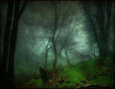 Hoia Baciu Forest - Transylvania, Romania