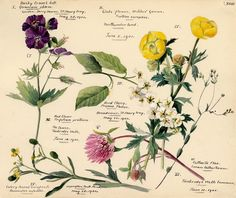 Wildflower Composite XVIII Art Print by Lillian Snelling | King & McGaw