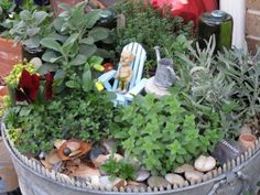 I love this! Pot of herbs with a little character at play among the leaves. :)