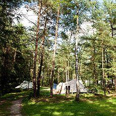 Zanderdennen xtaatsbosbeheer camping
