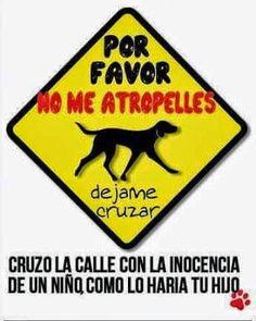 #Derechos #Animales