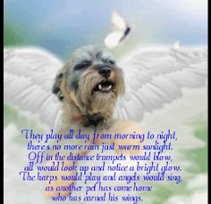 Free Pet Loss Page for Miniature Schnauzers at Rainbow Bridge Cotton De Tulear, Pet Loss Quotes, Pet Loss Grief, Dog Poems, Dog Heaven, Baby Memories, Rainbow Bridge, Animal Quotes, Pet Memorials