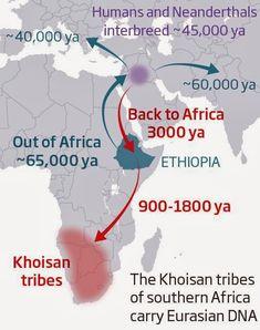 Humanity's forgotten return to Africa revealed in DNA. Now a study of southern African genes shows that, unexpectedly, another migration took western Eurasian DNA back to the very southern tip of the continent 3000 years ago. Religions Du Monde, Dna Genealogy, Early Humans, Human Evolution, Historical Maps, African American History, History Facts, World History, Ancient History