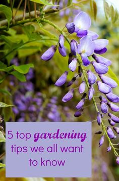 5 top gardening tips we all want to know - Thrifty Home