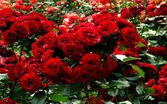 أسماء أشهر أنواع الزهور  والورود بالعربية والإنجليزية والفرنسية