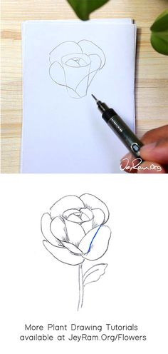 How to Draw a Rose : Step by Step for Beginners — JeyRam Art Roses Drawing Tutorial, Flower Drawing Tutorials, Rose Tutorial, Beginner Drawing, Drawing For Beginners, Rose Step By Step, Step By Step Drawing, Leaf Drawing, Floral Drawing