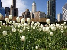 Spring walk at Lurie Garden in Chicago @Julie Anderson.com