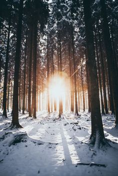 42 Ideas For Photography Nature Winter Travel - Sabine - Nature travel Forest Photography, Winter Photography, Landscape Photography, Travel Photography, Photography Ideas, Photography Lighting, Winter Szenen, Winter Trees, Photo Lovers