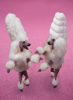 poodle greeting cards - Google Search