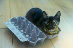 Of course, cats are not actually liquid–but if they are really solid, how do they move, contort, and manipulate their bodies in ways that seem so odd to us humans? Cute Cats, Funny Cats, Colley, Image Cat, Cat Facts, Cat Love, Animals And Pets, Crazy Animals, Pet Care