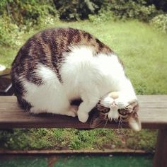 Cat acrobate