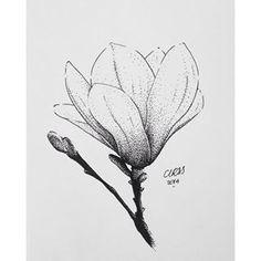 magnolia flower illustration - Google Search