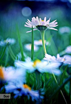 Ballerina in the grass by Mia Sunday on 500px