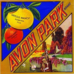 Printed on highest quality stock soft gloss paper. Actual image dimensions are approximately 10 x 10 inches. Avon Park Florida, Florida Travel, Vintage Food Labels, Orange Crate Labels, Label Art, Vegetable Crates, Florida Oranges, Old Crates, Vintage Florida