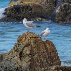 #Birds #Sea #Rocks #SnapperRocks #GoldCoast #Australia #VisitGoldCoast by jokmau