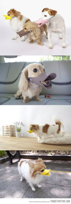 A duck-billed protective muzzle for dogs.   May as well look hysterical if you can't play nice in the park   hahahahaha