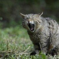 #dogalize Perché i gatti mordono, le possibili cause #dogs #cats #pets