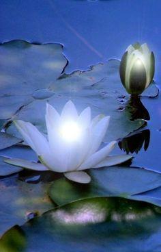 On the Pond. | A 1 Nice Blog