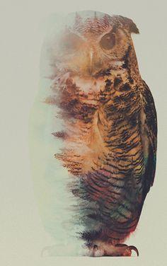 L'inspiration du mercredi, nous allons parler de l'artiste Norvégien Andreas Lie. Il a réalisé une magnifique série de portraits d'animaux avec une double exposition.Andreas Lie, un artiste visuel basé à Bergen en Norvège. Vivant prêt des montagnes et de la nature sauvage, il a trouvé une belle façon de mélangerles ...