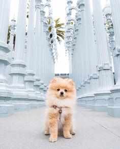 """King Kong Da Savage Pom (@kongdasavage) on Instagram: """"My full name is Young Doggie King Kong Da Savage Pom """""""