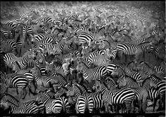 """(Fotó: Tomasz Gudzowaty, az ő monográfiája """"Closer"""".) - Pictify - a közösségi művészeti hálózat"""