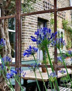 Agapanthus reflections in this large Aldgate Home architectural mirror