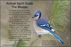 Animal Spirit Guide : The Bluejay