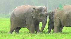 Elephants in the Rain | Save Elephant Foundation