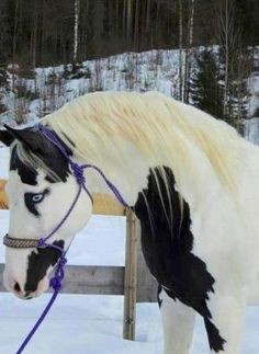 What a beautiful horse by bonita