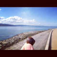 宍道湖とシジミ