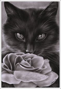 Charcoal drawing of a cat. --- found this on someones tattoo page, but i think it would make a sweet picture in the bedroom or bathroom or something!!