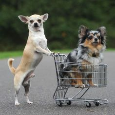 Friends go shopping with you...  Best Friends push you in the shopping cart.