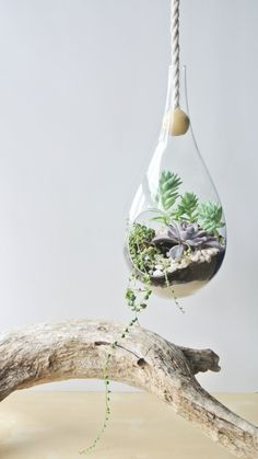 Hanging tear drop terrarium | Why It Works Wednesday: 9 Terrariums That Are Prime For The Centerpiece Spotlight  http://storyboardwedding.com/9-terrarium-wedding-centerpieces/